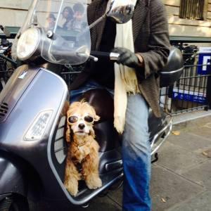 Dog on moto