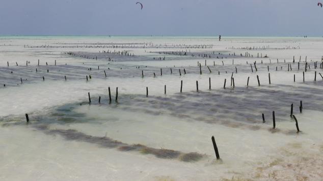 Sea weed farm