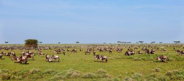 Herd 5