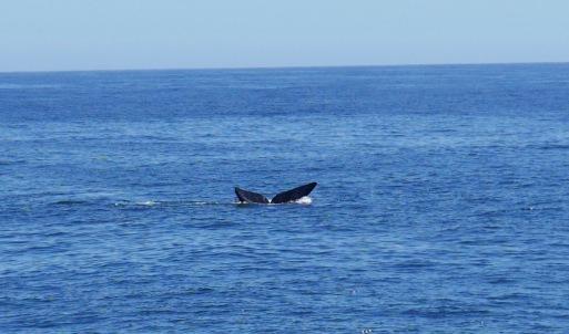 RVM - whales