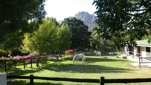 Waking up with horses