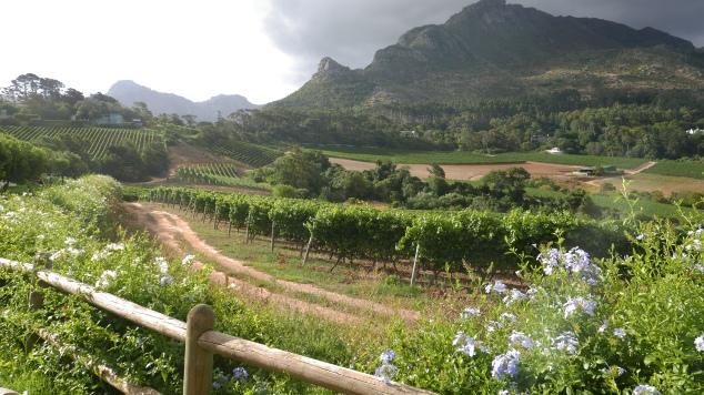Wine farms