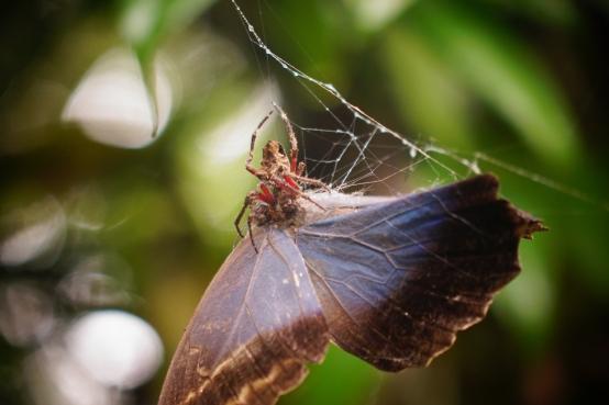 Eaten butterfly