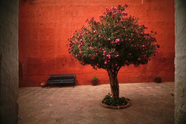 Convent tree