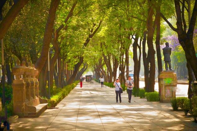 beautiful Avenue Paseo de la Reforma